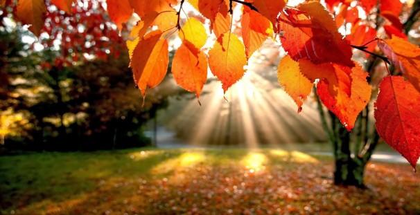 Geniet je van de nazomer, kom trainen in een herfstomgeving.